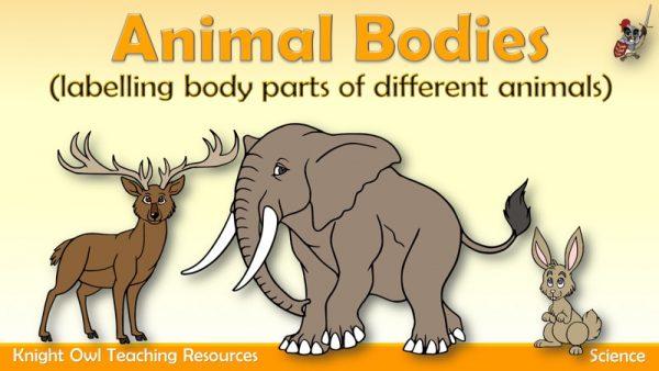 Animal Bodies1