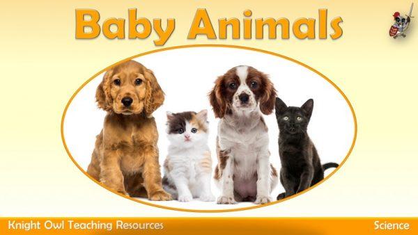 Baby Animals1