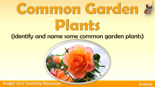 Common Garden Plants1