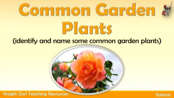 Common Garden Plants1