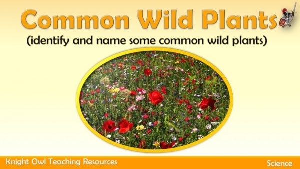 Common Wild Plants1