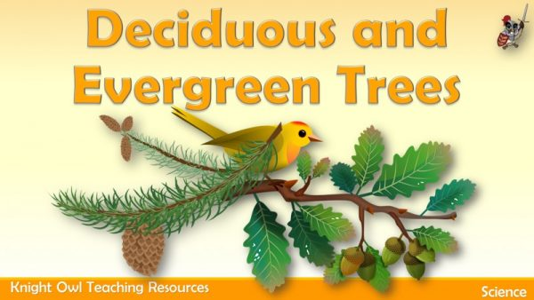 Deciduous and Evergreen Trees1
