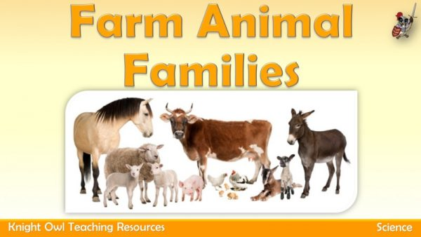 Farm Animal Families1