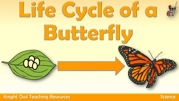 Life Cycle of a Butterfly 1