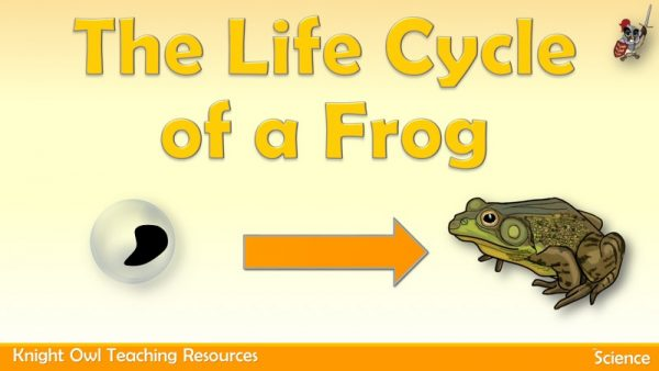 Life Cycle of a Frog 1