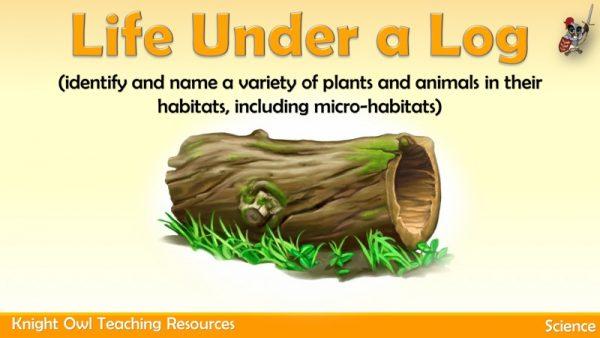 Life Under a Log 1