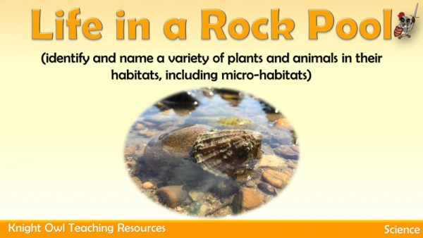 Life in a Rock Pool 1