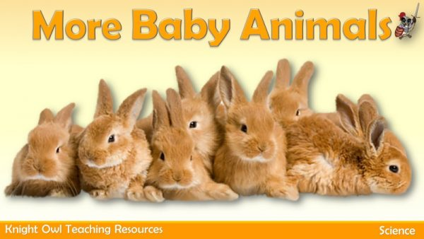 More Baby Animals 1