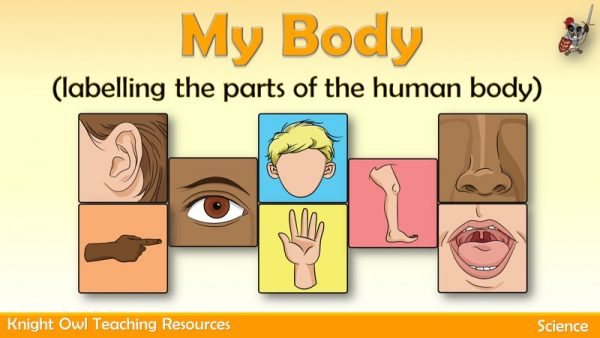 My Body - labelling parts of the human body1