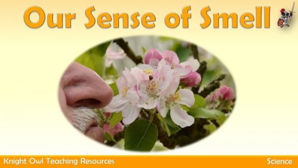 Our Sense of Smell 1