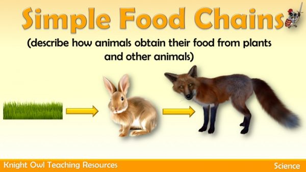 Simple Food Chains 1