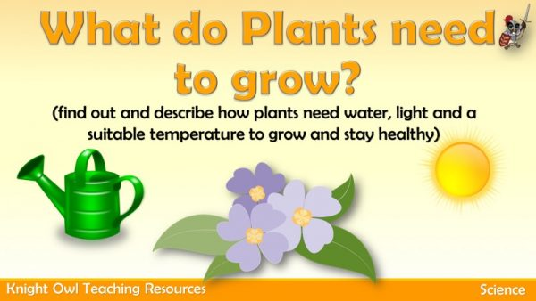 What Plants need to grow 1