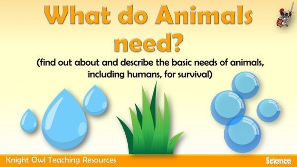 What do Animals need 1