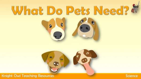 What do Pets need 1