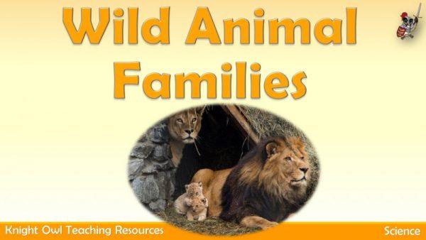 Wild Animal Families 1