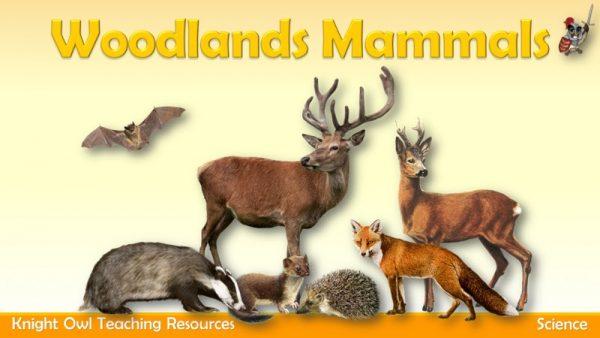 Woodlands Mammals 1