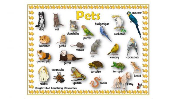 Pet WM1