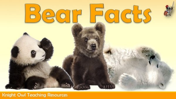 Bear Facts1