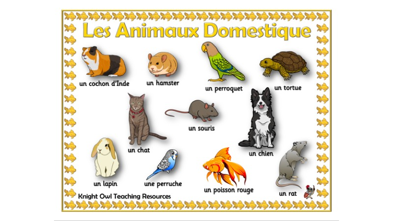Pet Names In French Word Mat